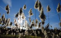 Holland Nature Photos